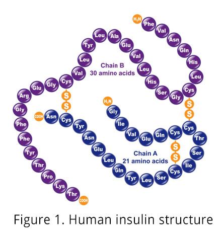 Figure 1. Human insulin structure