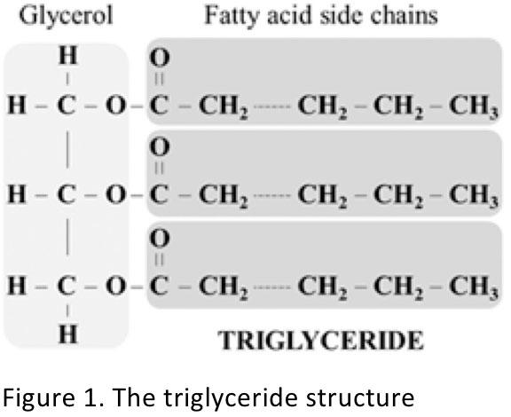 Figure 1. The triglyceride structure